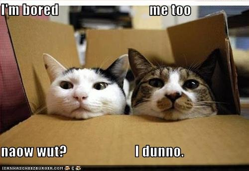 http://psychobabblesblog.files.wordpress.com/2009/12/funny-pictures-box-cats-are-bored.jpg