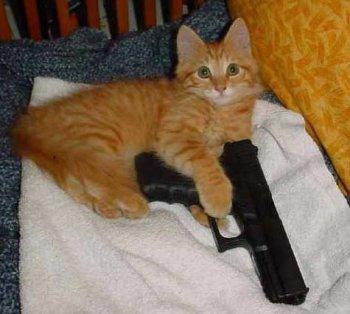 kitty_with_gun