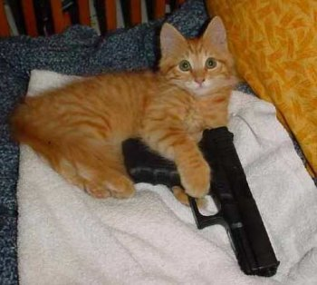 kitty_with_gun