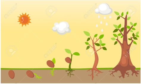 26267551-Tree-life-cycle-vector-Stock-Vector-seed-growing-tree